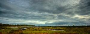 Upton Marshes