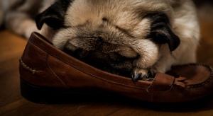dog shoe